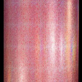 Red Stingray Rainbow